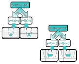 Quadratic Function Transformations Word Wall