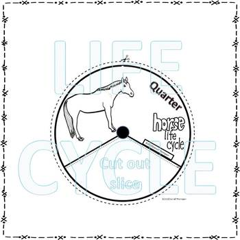 Quarter Horse (Life Cycle Spinner)