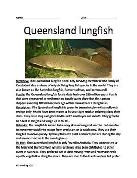 Queensland Lungfish - Australian Fish - Information Facts