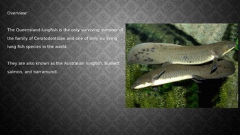 Queensland Lungfish - Power Point - Information Facts Pictures