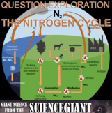 Question Exploration: What Happens During the Nitrogen Cycle?