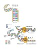Question Exploration: What is DNA?