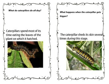 Butterflies Questions and Answers
