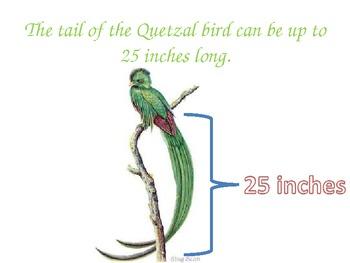 Quetzal Bird-Guatemala