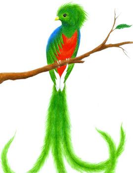 Quetzal no muere nunca bundle