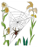 Quick Ten Spiderweb