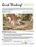 Quick Thinking - Robin's Nest