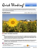 Quick Thinking - Sunflowers