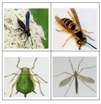 Quiz Board Pictures -- Insects 2