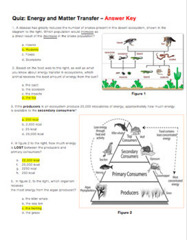 Quiz: Energy and Matter Transfer in Ecosystems