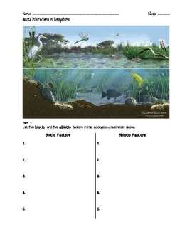 Assessment: Interactions in Ecosystems Quiz
