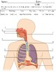 Respiratory System Test