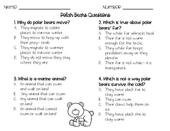 RACE Constructed Response Writing Practice- Bears