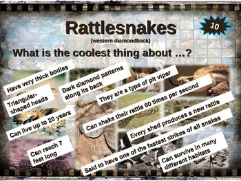 RATTLESNAKES: 10 facts. Fun, engaging PPT (w links & free graphic organizer)