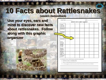 RATTLESNAKES: 10 facts. Fun, engaging PPT (w links & free
