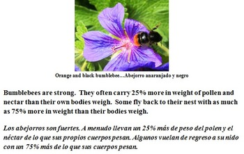 READING AND WRITING ABOUT BUMBLEBEES! (SCIENCE, FUN ACTIVITIES, CCSS, SPANISH)