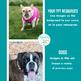STOCK PHOTOS: DOGS