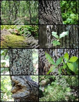 REAL Nature Photos (Set 1)
