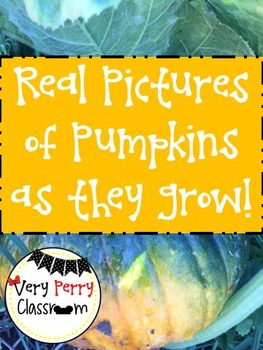 REAL Pumpkin pictures