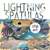 REALISTIC CLIP ART PACK! Shark Species