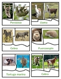 RESEMBLANCE - ANIMALS AND THEIR BABIES - CENTER IN SPANISH