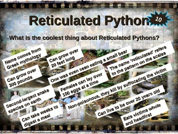 RETICULATED PYTHON: 10 facts. Engaging PPT (w links & free graphic organizer)