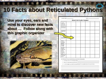 RETICULATED PYTHON: 10 facts. Engaging PPT (w links & free