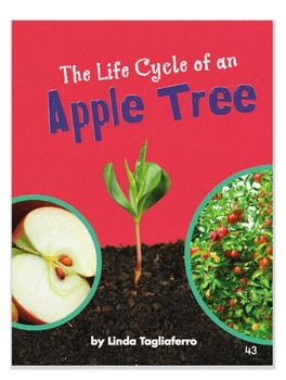 Ready Gen First Grade: The Lifecycle of An Apple Tree Smartboard Version