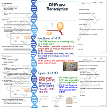 RNA Bundle: RNA & Transcription, Genetic Code & Protein ...