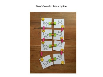 RNA/DNA Structure & Transcription Modeling Kit with Five Scaffolded Activities