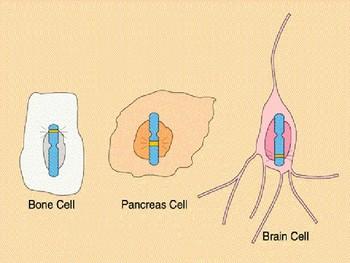 RNA Notes