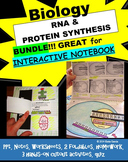 RNA (Ribonucleic acid) & PROTEIN SYNTHESIS Notes, PowerPoint, & Activities