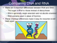 RNA and Protein Synthesis Powerpoint