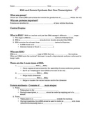 RNA and Protein Synthesis: Transcription fill in the blank notes