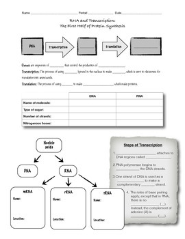 RNA and Transcription: Worksheet or Guided Notes by D Meister | TpT