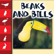 Beaks and Bills [Interactive eBook]