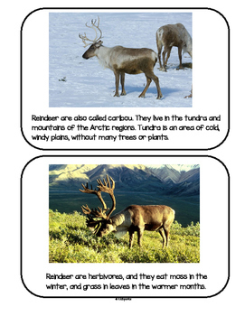 RUDOLPH and Reindeer Friends Theme Unit Preschool
