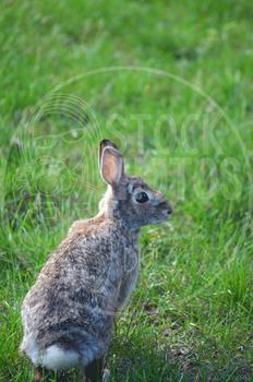 Rabbit 1 - Stock Photo