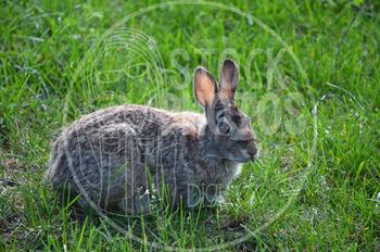 Rabbit 2 - Stock Photo