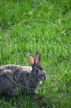 Rabbit 3 - Stock Photo