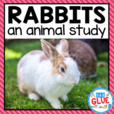 Rabbits: An Animal Study