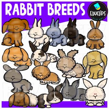 Rabbit Breeds Clip Art Bundle {Educlips Clipart}