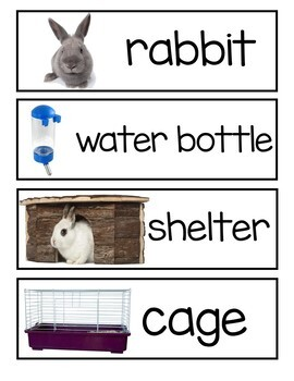Rabbit Classroom Pet