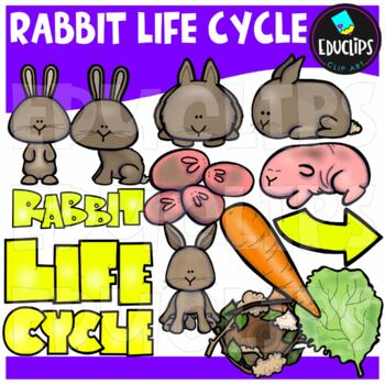 Rabbit Life Cycle Clip Art Bundle {Educlips Clipart}