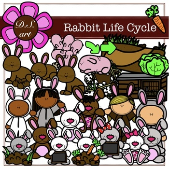 Rabbit Life Cycle Digital Clipart (color and black&white)