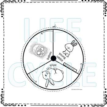 Rabbit (Life Cycle Spinner)