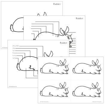 Rabbit Nomenclature - Elementary