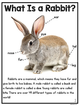 Rabbit Worksheets For Kindergarten