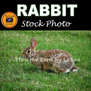 Rabbit in the Grass Stock Photo #85