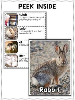 Nonfiction Unit - Rabbit Activities